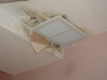 Mold around the ventilation system