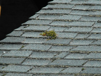 Remove moss from the roof.