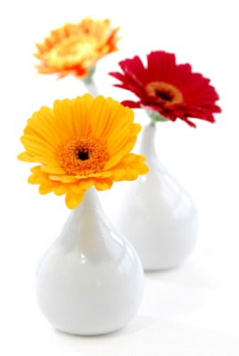 Trio of flowers in vases