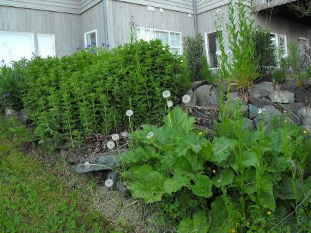 Weed your overgrown garden before buyers come over.