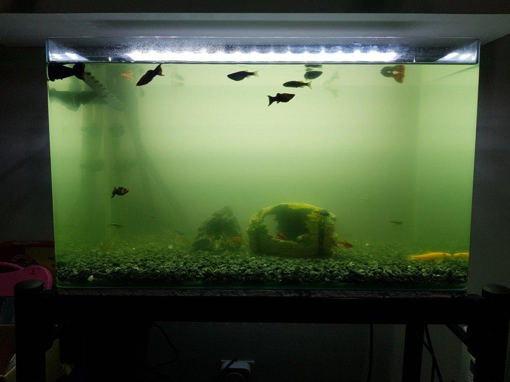 Depersonalizing your home. Clean dirty aquarium.