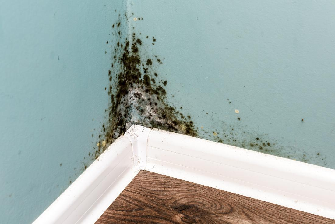 House for sale. Getting rid of mold.